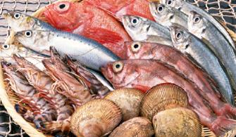 お魚のお弁当